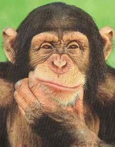 chimpanzee_thinking